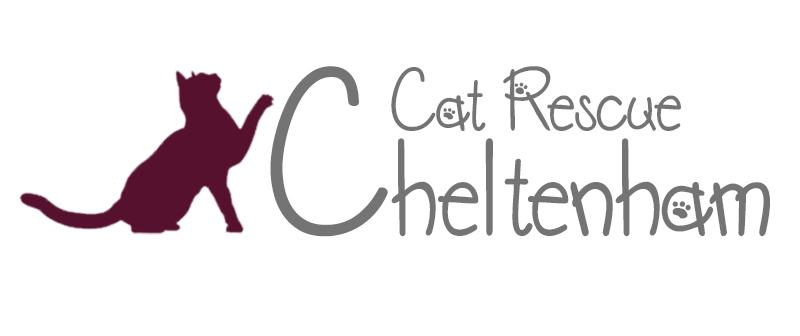 Chelthenham Cat Rescue | Coming Soon: http://www.cheltenhamcatrescue.org.au/
