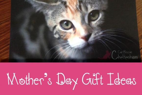 Mother's Day Gift Ideas – Your mum will love one of our CCR Gift Cards!