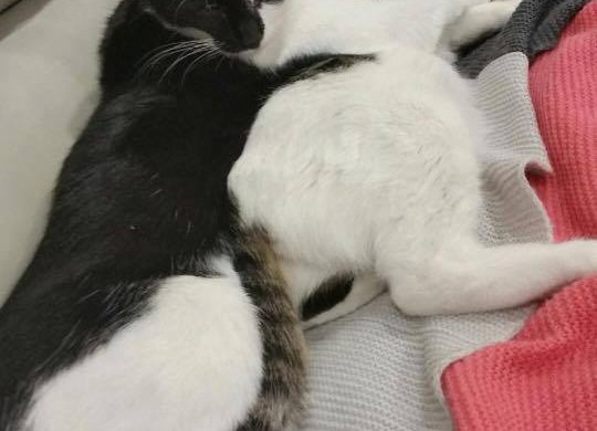 Adopted Cats Cheltenham – Lulu and Arlo