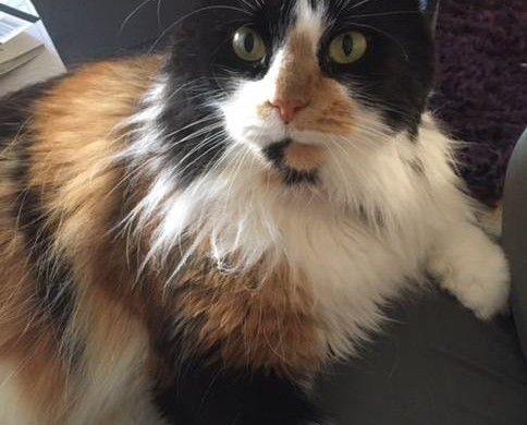 Pregnant Cat Rescued, Cheltenham – Scarlett Finds a home!