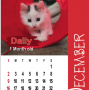 Cheltenham Cat Rescue 2018 Calendar