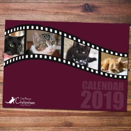 2019 Cheltenham-Cat-Rescue-Calendar