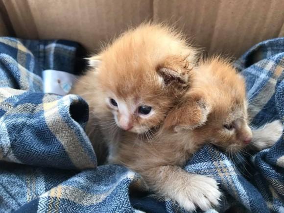 Cheltenham Cat Rescue Neo Natal Care