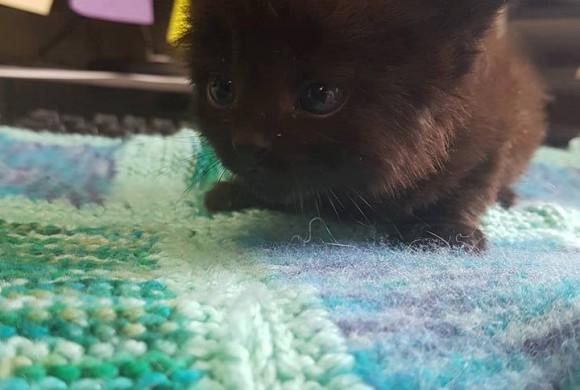 Kittens Cheltenham – Meet REVA