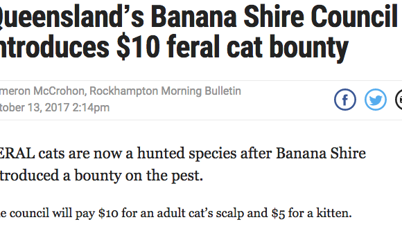 "Queensland's Banana Shire Council Introduces $10 ""Feral"" Cat Bounty"