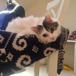 Kitten Adoption Melbourne – HAPPY ADOPTION TAILS!!
