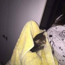 Noble Park Kitten Rescue – A RESCUE MISSION FOR LEXI