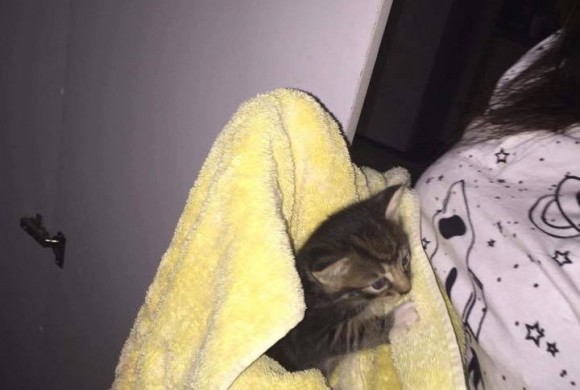 Noble Park Kitten Rescue – A RESCUE MISSION FOR LEXI