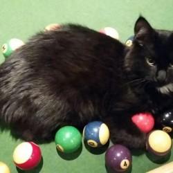 Woodend Cat Adoption – HAPPY ADOPTION TAILS