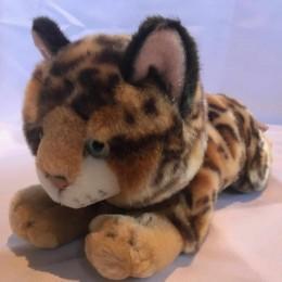Cheltenham Cat Rescue, Benal Tiger