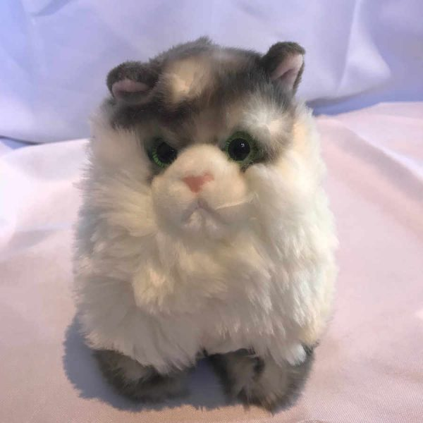 Cheltenham Cat Rescue, SilverTabby