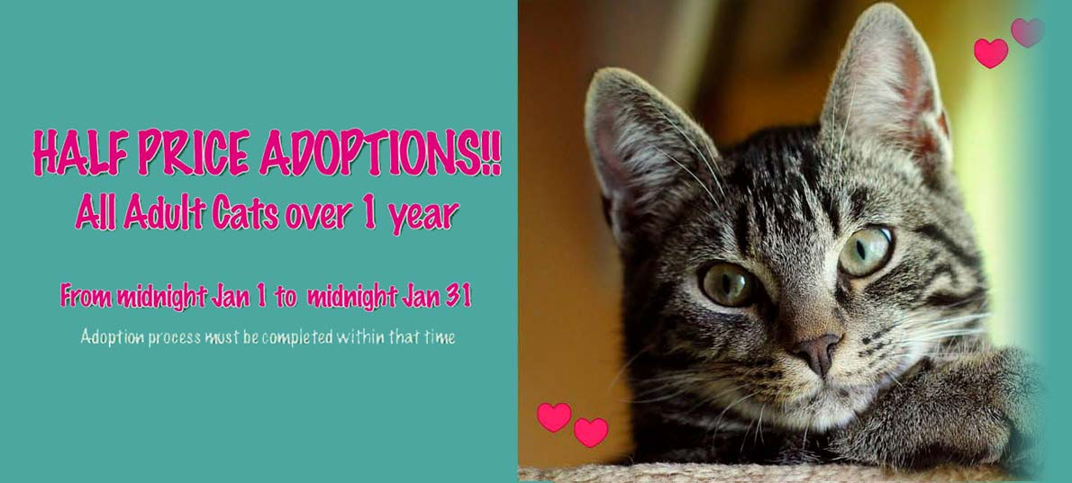 CCR-January-2019-half-price-adoptions