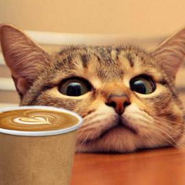 Cat-rescue-coffee-donation-campaign
