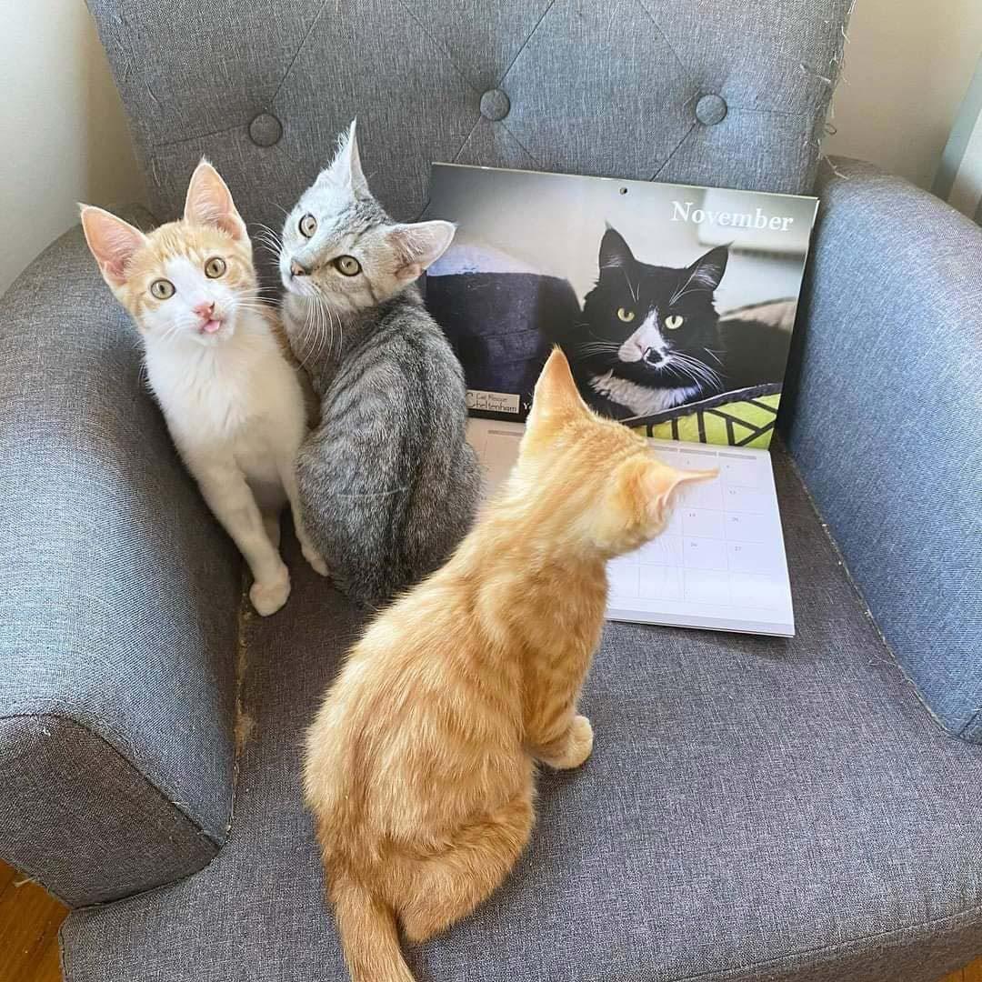 Shop - Cat merch galore